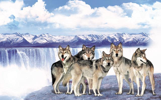 拓展团建,如何打造一支狼性团队呢